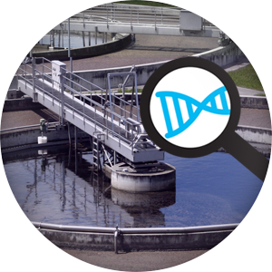 wastewater microbiome